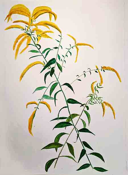 Linda Rubenstein's Artwork, Goldenrod, for the Title Page of Toni Ortner's Daybook III